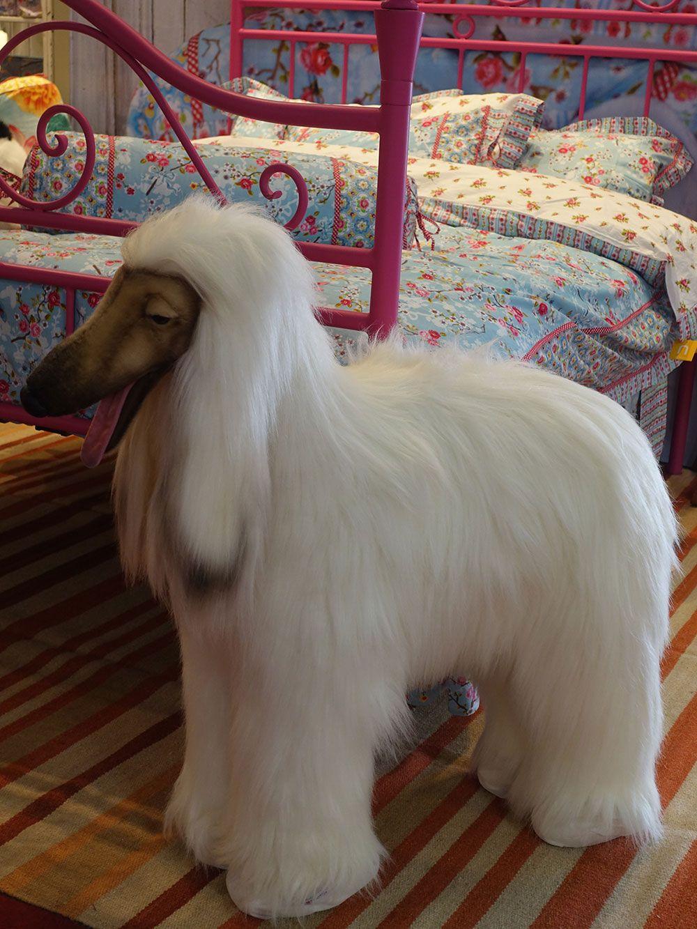 Cachorrinho PERFEITO da Nusa Dua